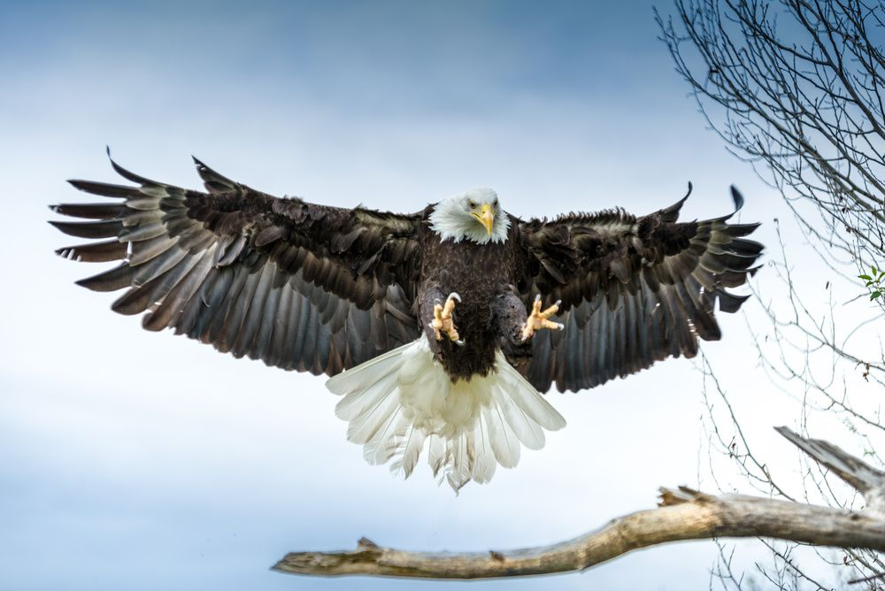 Des aigles pour chasser les drones. Dare to be better ? OK !