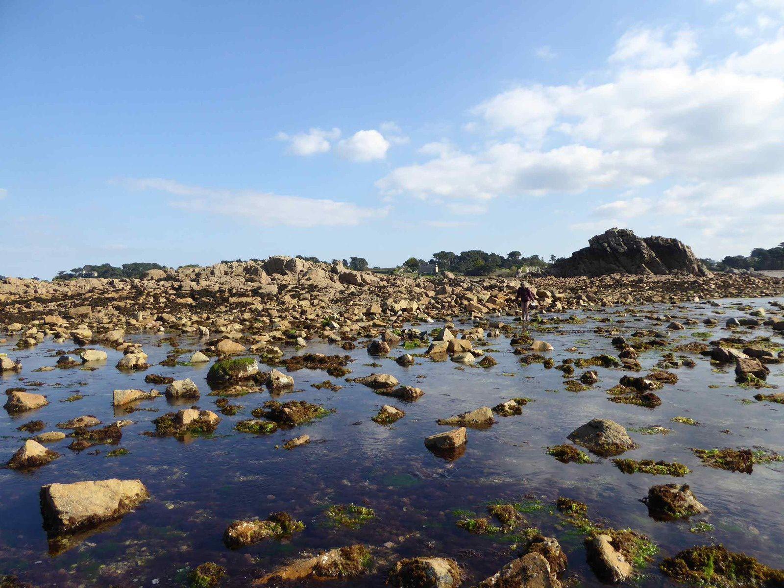 Journée algues à Penvénan du 30 septembre 2015