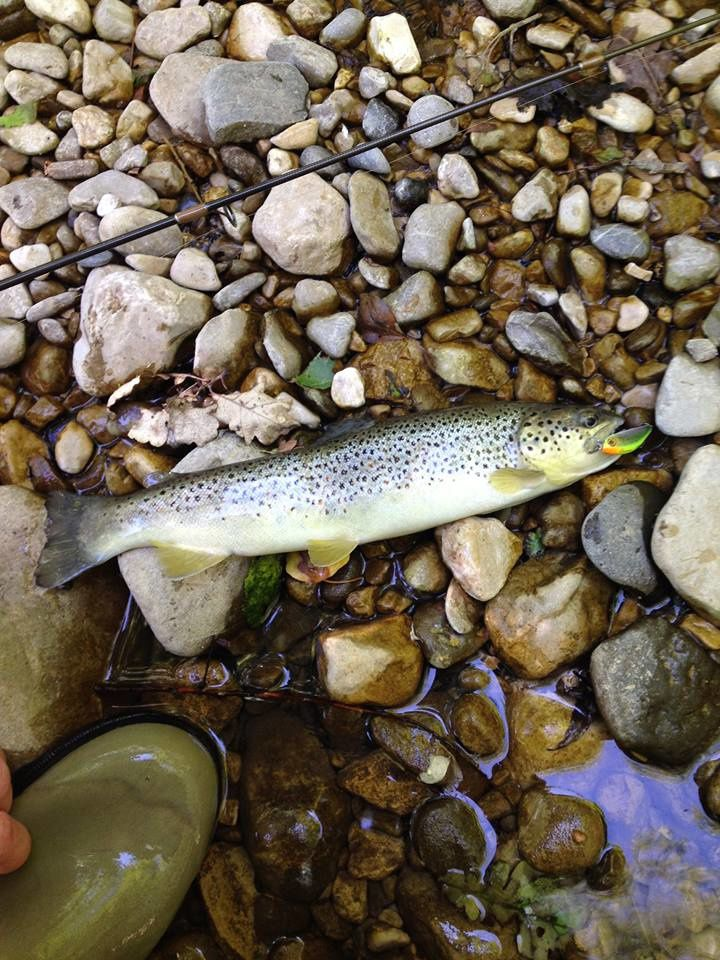 34cm sauvage leurre chubby minnow visible trout.