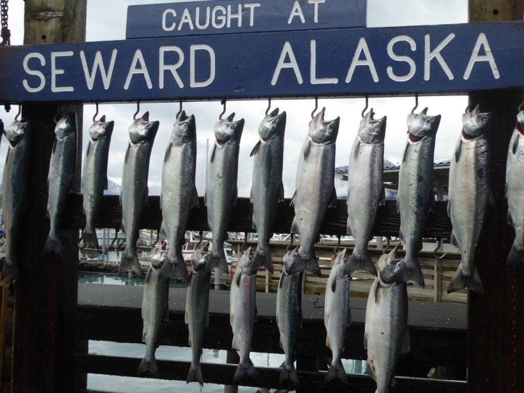 La pêche au saumon