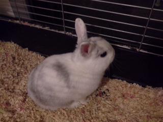 Orion, notre petit lapin de paques.