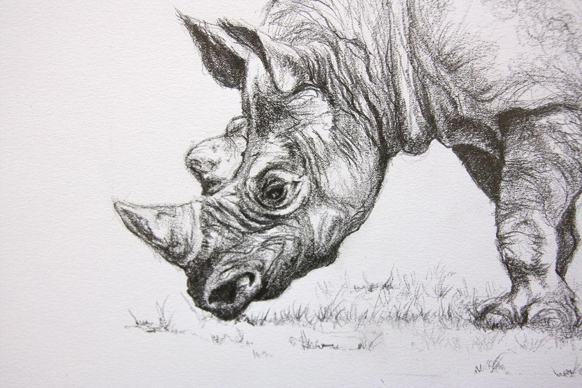 Dessin de rhinoceros jean baptiste de poret - Rhinoceros dessin ...