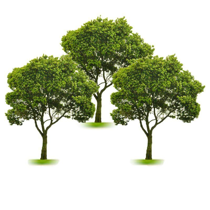 conte des trois arbres le blog de hospitalite besancon. Black Bedroom Furniture Sets. Home Design Ideas