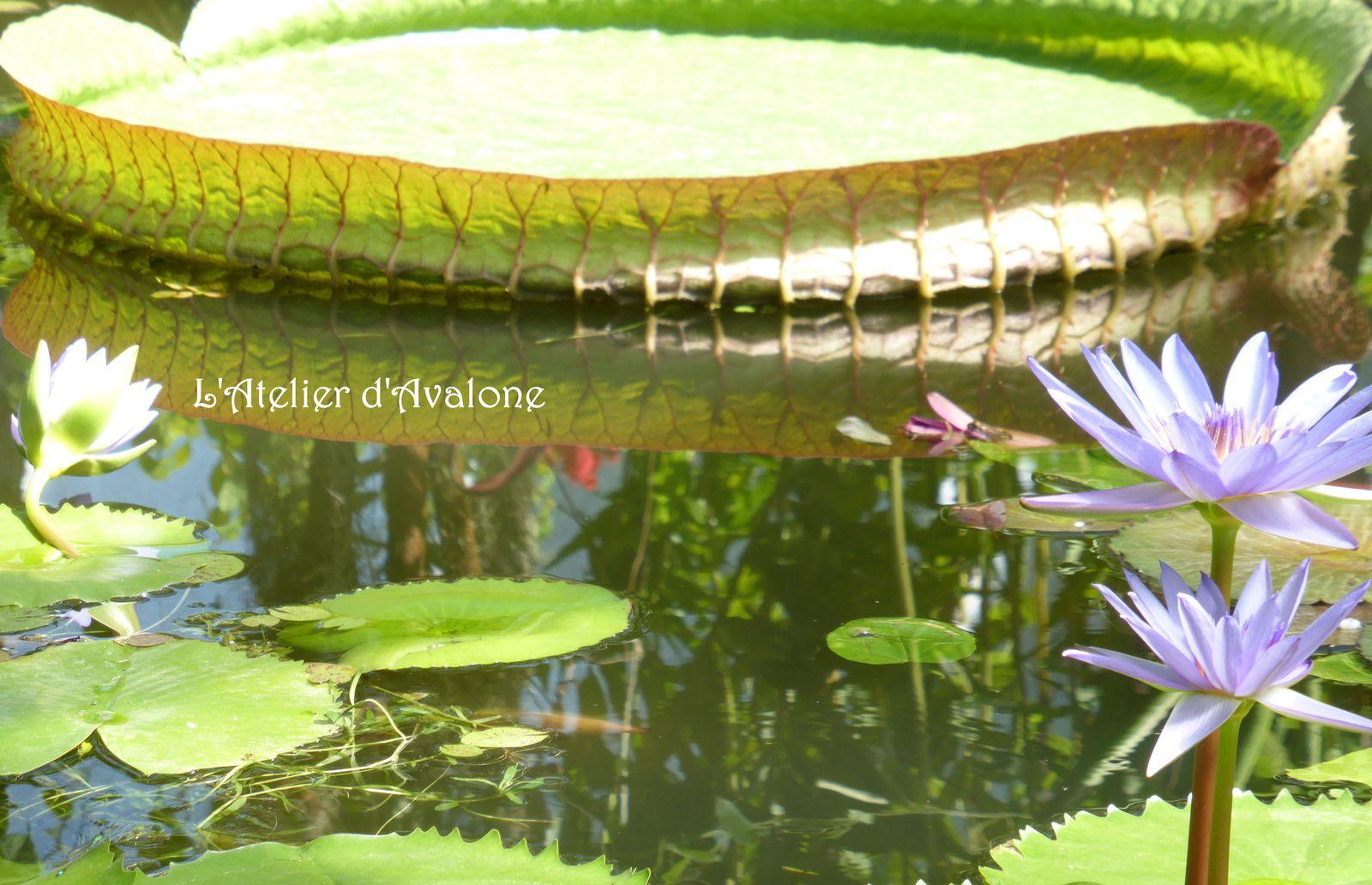 Photographie d'art numérique. Au fil de l'eau vive. Août 2014.