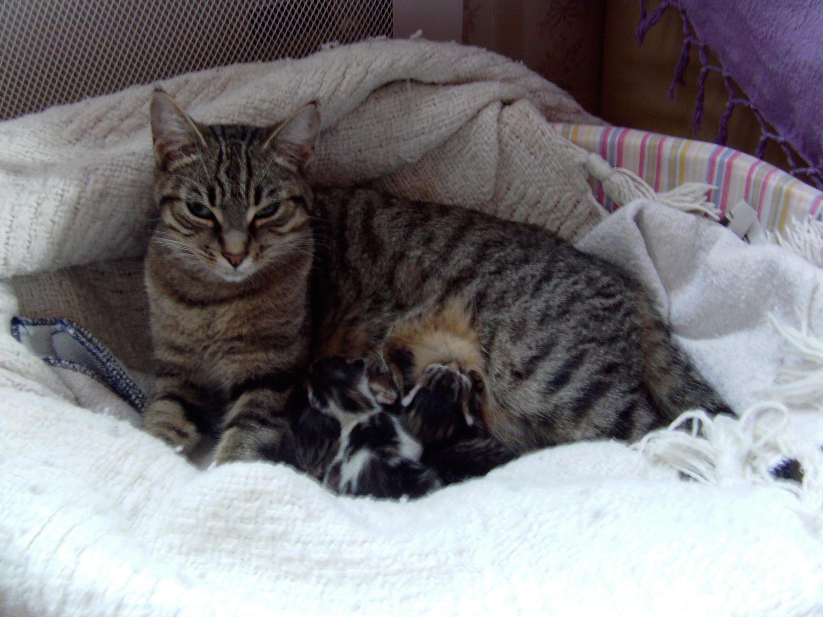 Mes petits chats ont deux ans l 39 atelier de lilinours - Mes chats ont des puces ...