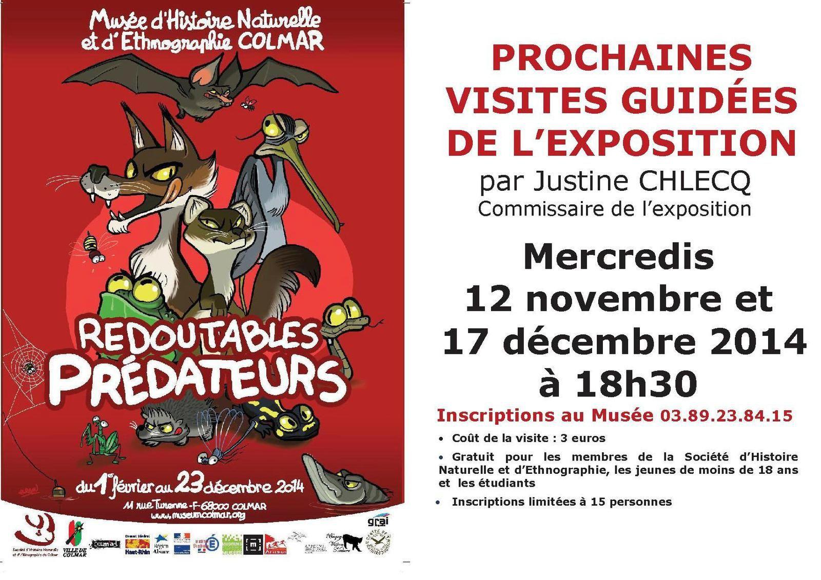 Vendredi 14 novembre à Colmar - Les chauves-souris, reines de la nuit