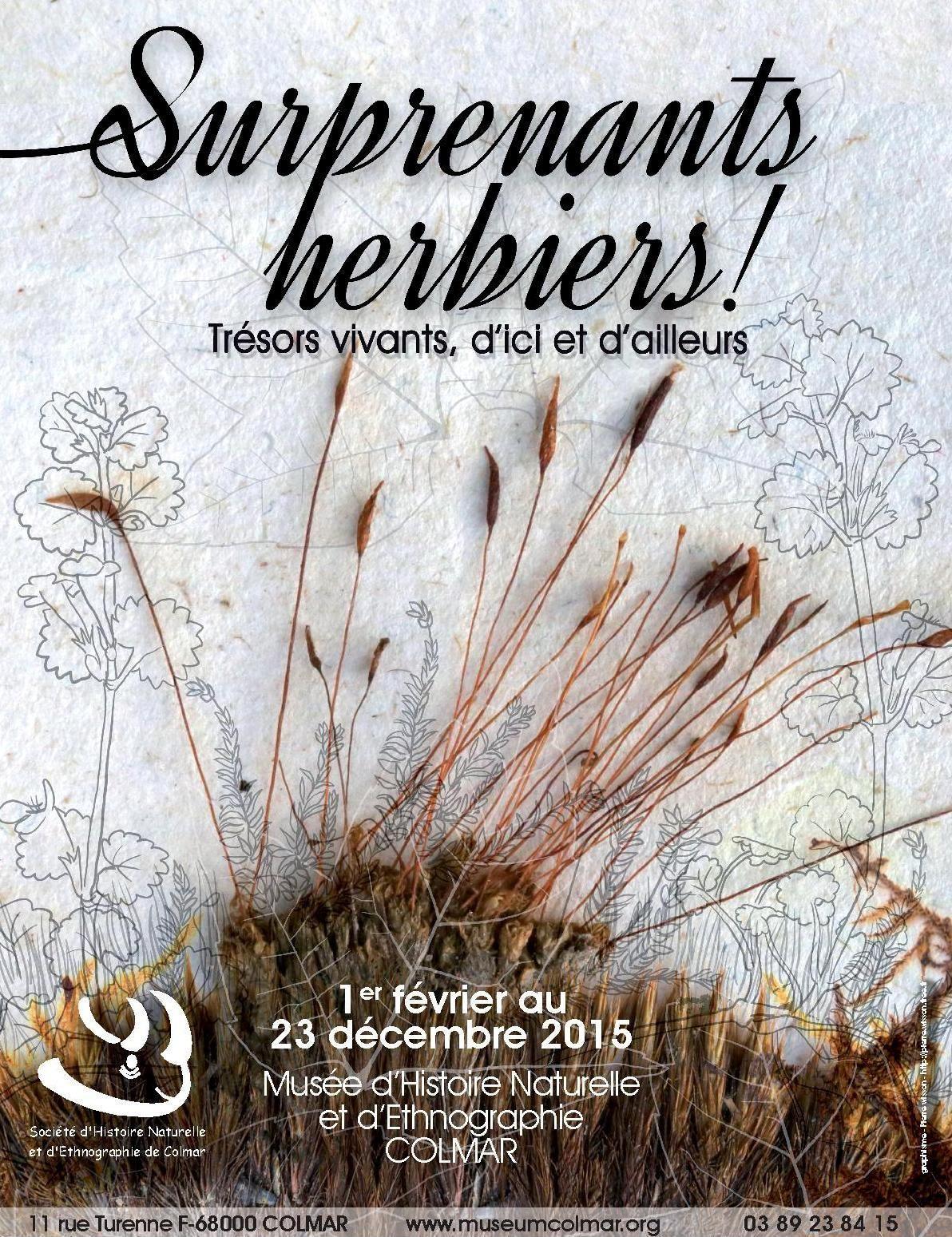 Au Muséum de Colmar, de surprenants herbiers...