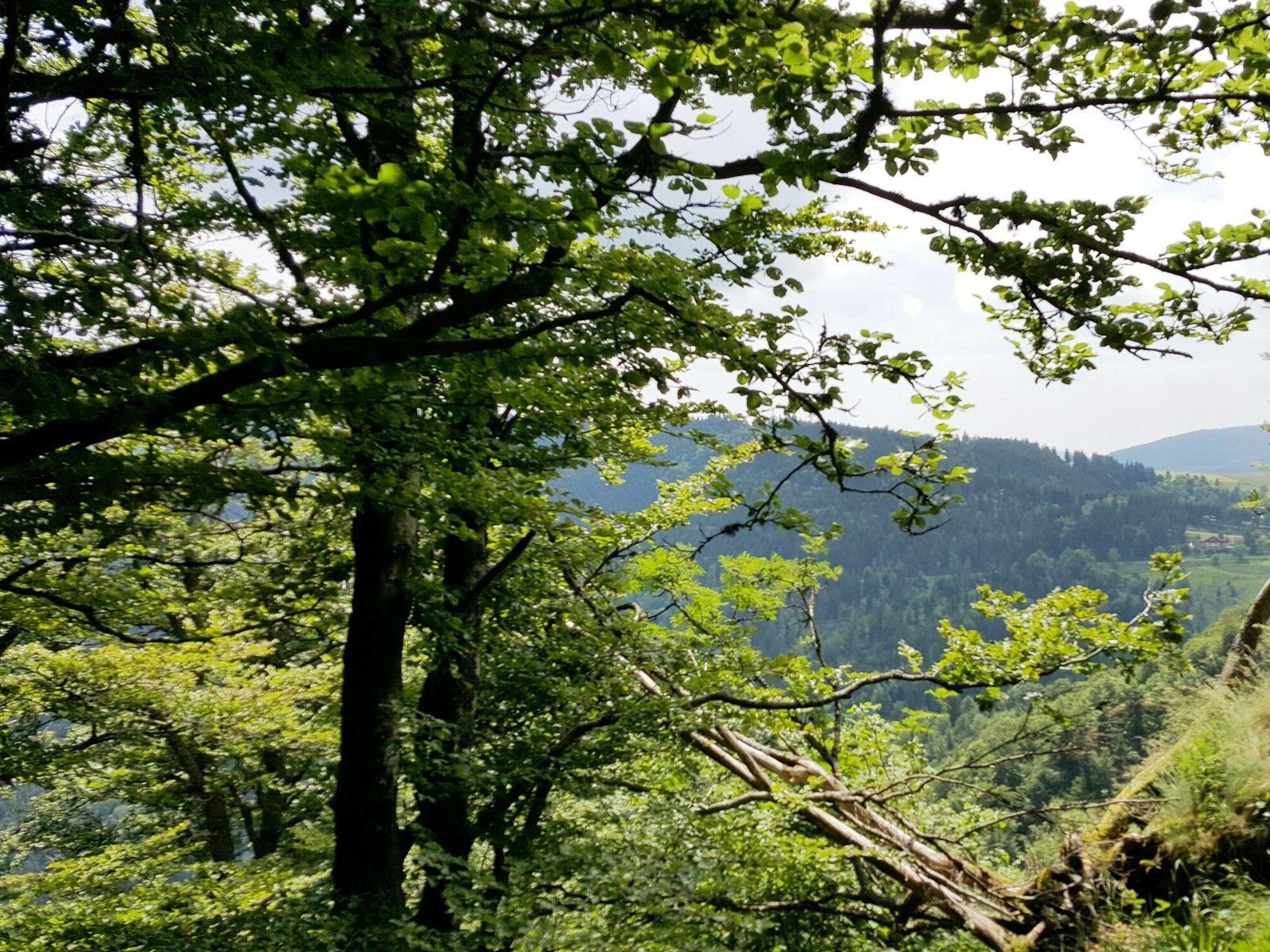 C'était le 14 juin, de Tellure au col des Bagenelles, en itinéraire découverte