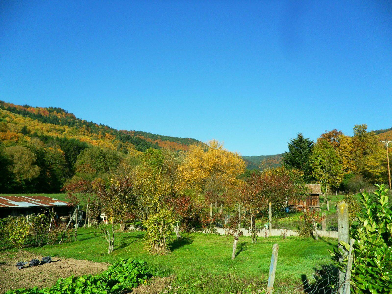 Mercredi 4 novembre - Randonnée de Wihr-au-Val à Gunsbach