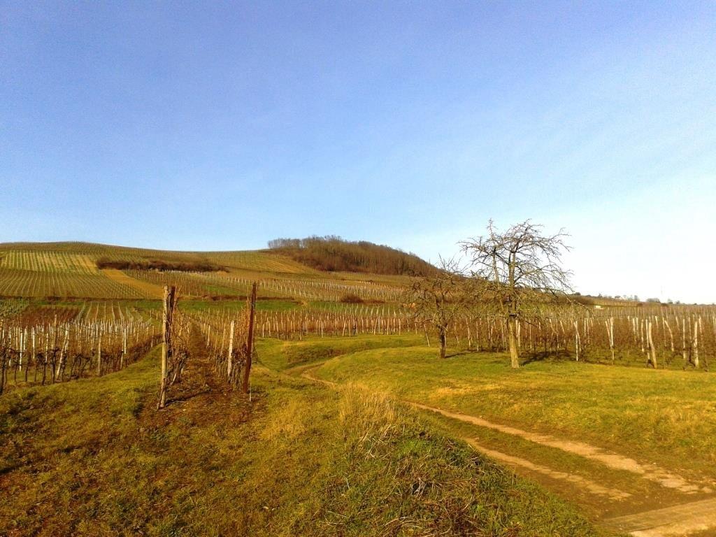 Mercredi 13 avril - Randonnée à Westhoffen, entre vergers, vignes et forêts