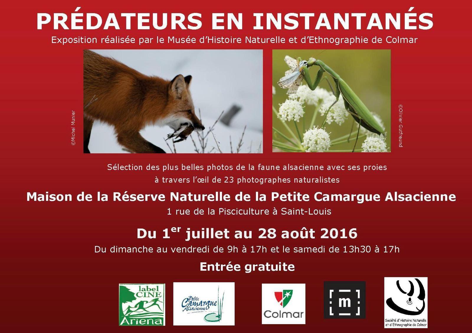Les prochains rendez-vous du Muséum d'Histoire naturelle de Colmar