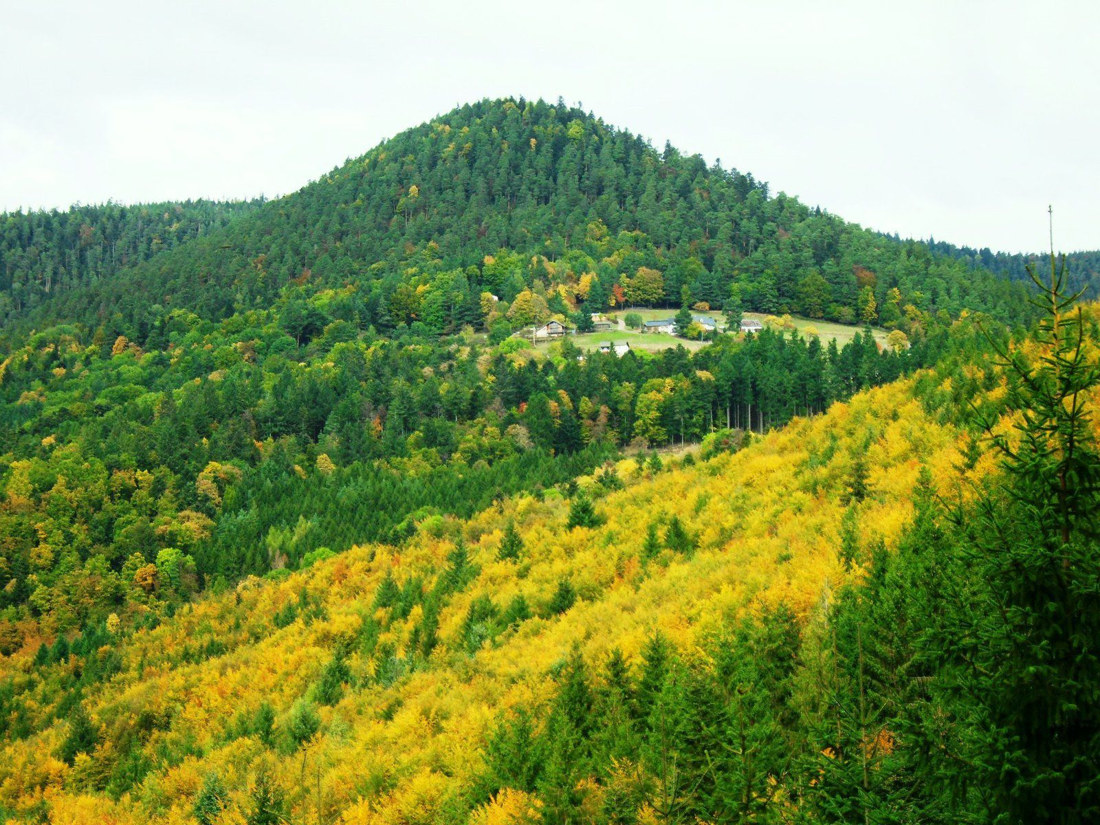 Mercredi 9 novembre - Randonnée de Ribeauvillé au Schelmenkopf