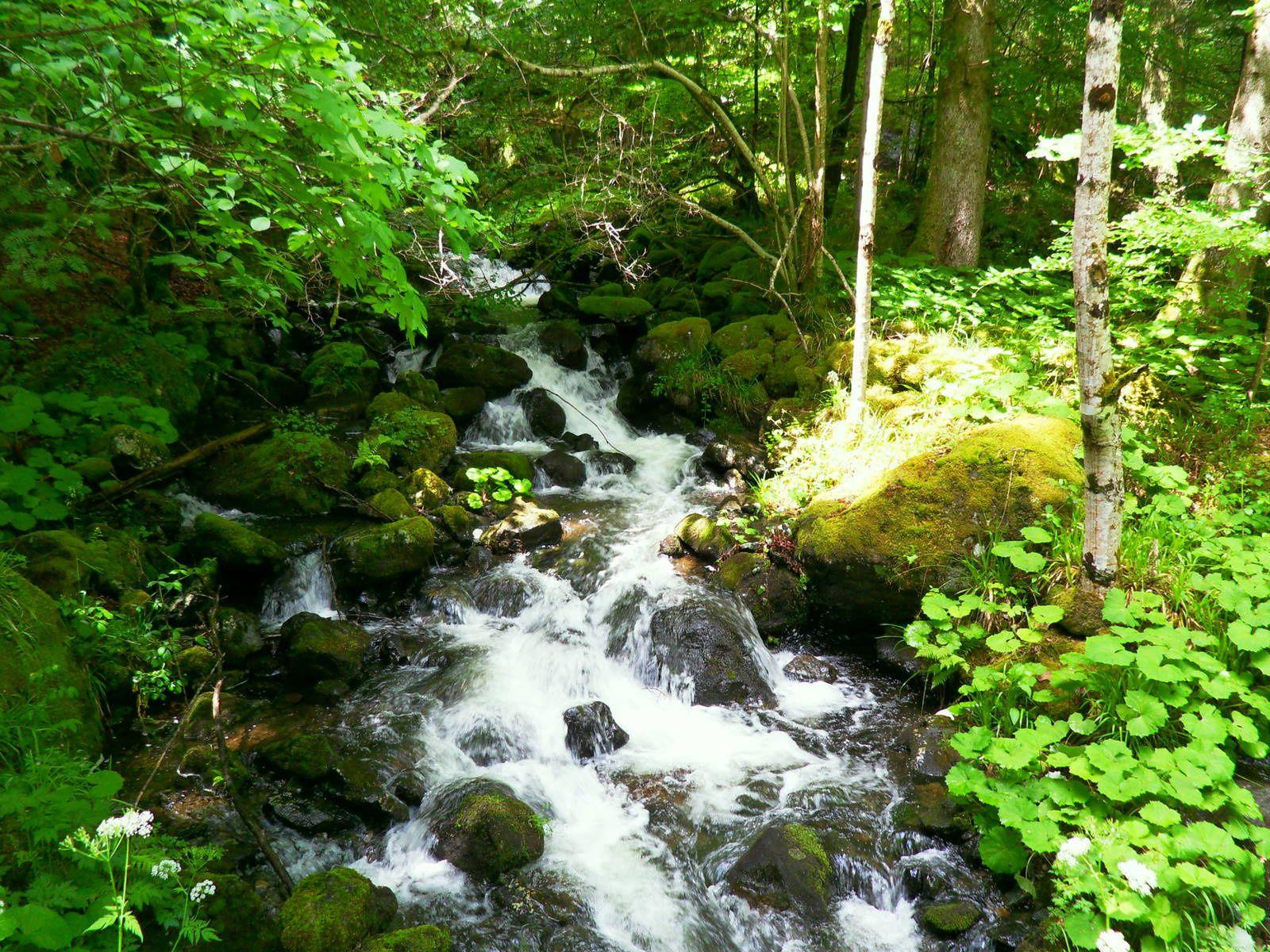 Mercredi 12 juillet - Randonnée autour du lac de la Lauch