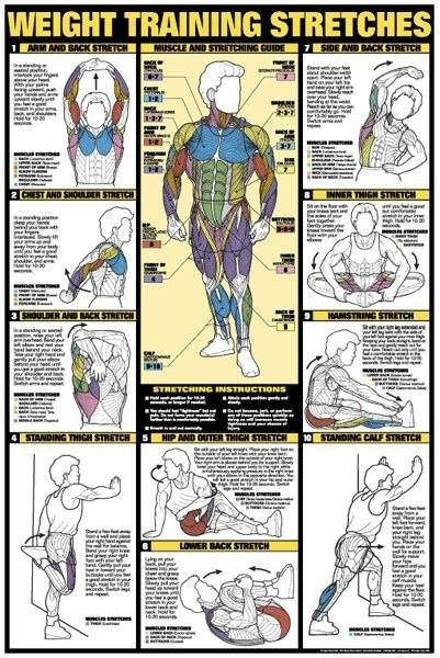 TOP 1O WEIGHT TRAINING STRETCHES !