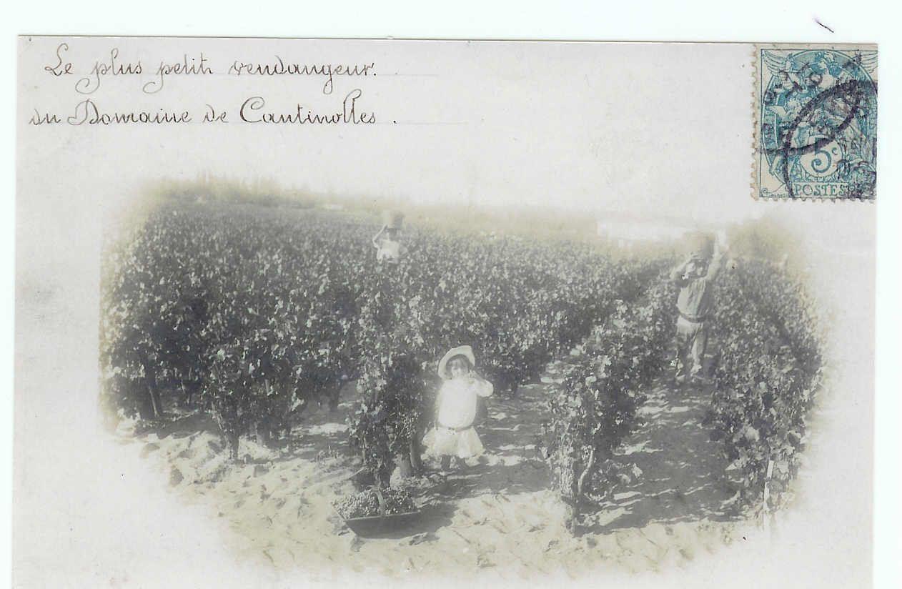 La famille Girardeau est propriétaire du vignoble de Cantinolles depuis la fin du XIX ème siècle, une vraie dynastie!