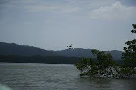 Imágenes del río Congo