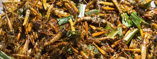 Saltamontes fritos en Bangkok (Tailandia) LVD.- El Muni.