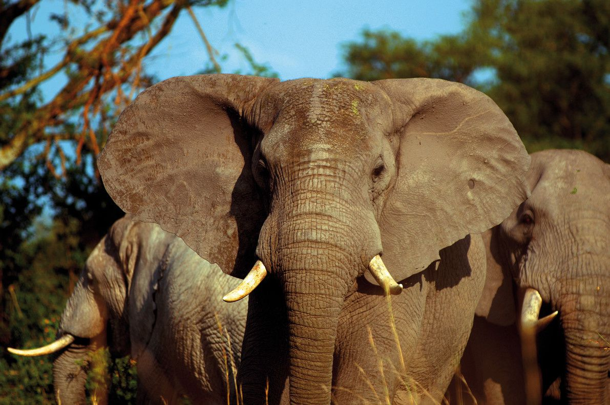¿Quieres tener memoria de elefante? Aquí van 10 trucos infalibles.