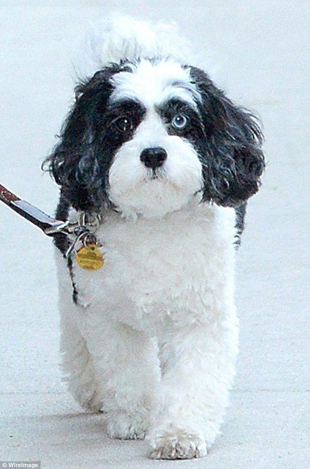 &quot&#x3B;I LOVE MY DOG&quot&#x3B; DAVID BOWIE &amp&#x3B; MAX