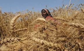 Pakistan Agriculture and High Food Prices