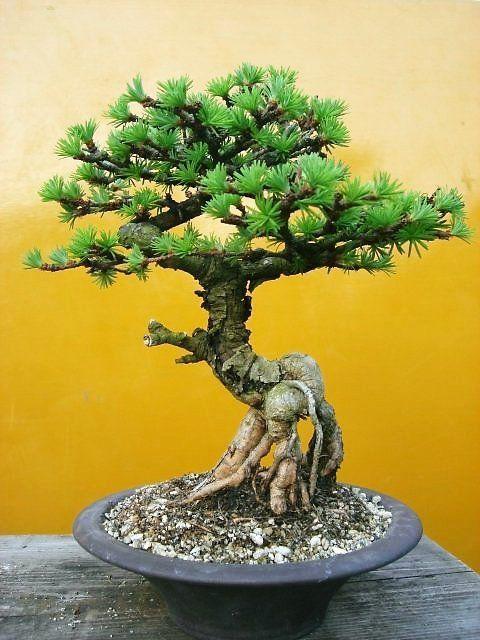 Rubrikabrac n°14, au creux des branches, au coeur des racines