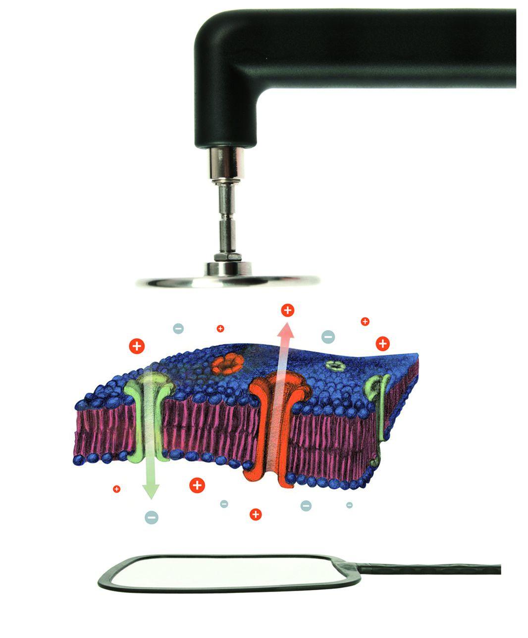 La Thérapie Cellulaire s'adresse directement aux tissus et à leur activité métabolique et cellulaire