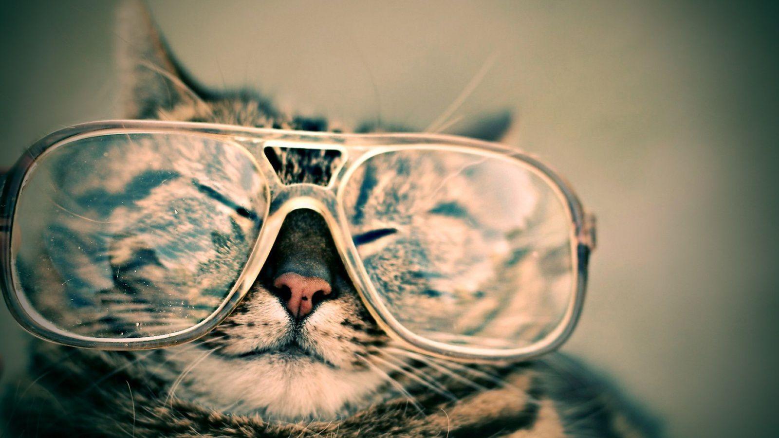 ... si je pouvais faire le poids face à un chat