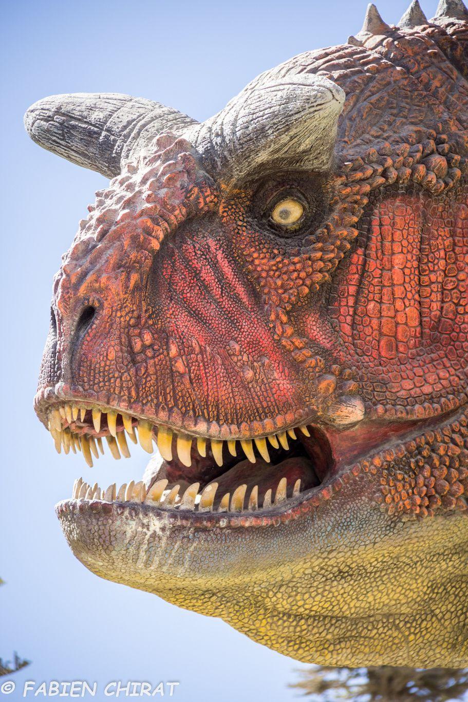 Carnotaurus (Abelisauridé typique d'Amerique du sud)