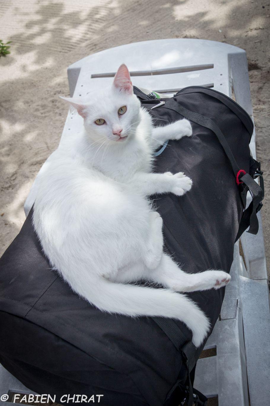 Le chat de la pension s'accroche à mon sac pour venir faire un tour du monde.
