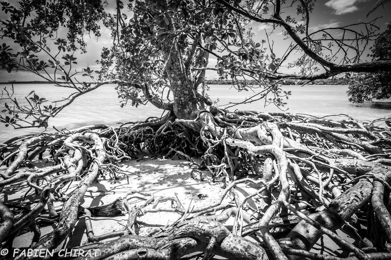 Nid de racines