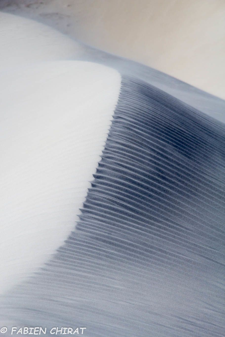 Rides dans les dunes