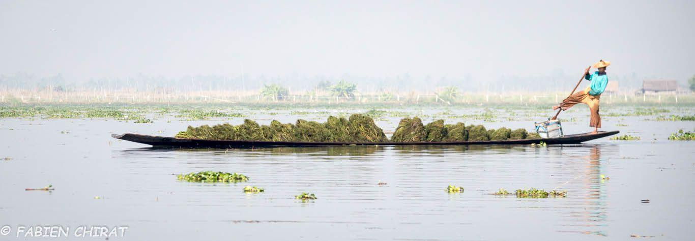 Ramassage d'algues pour les jardins flottants.