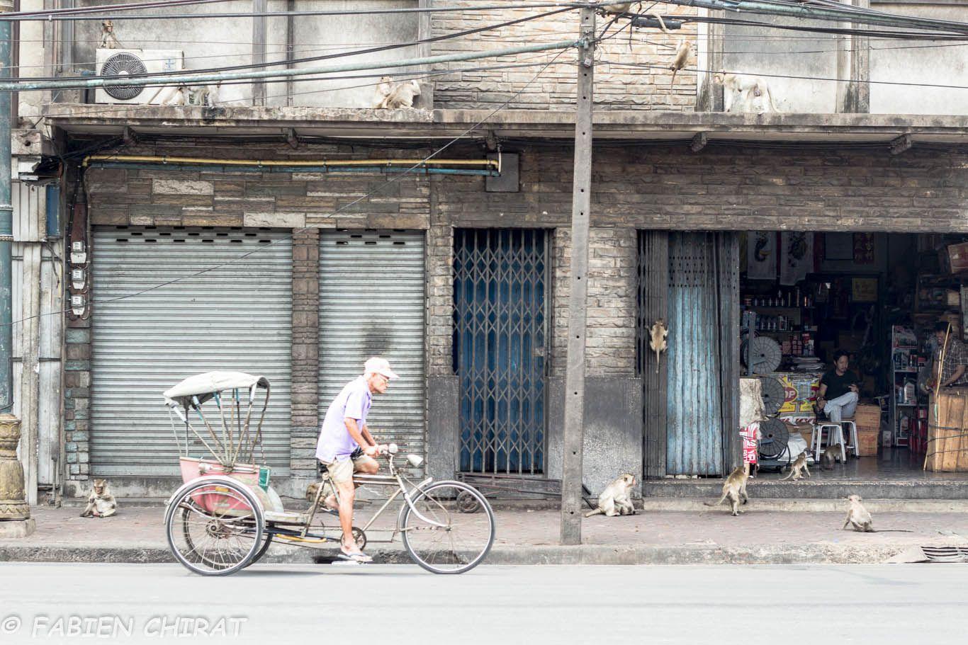 Lop Buri, des singes dans la ville.