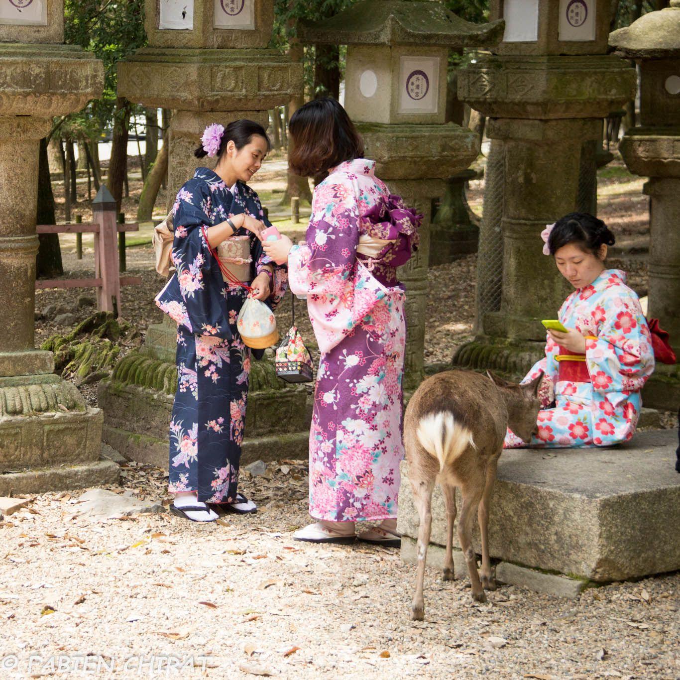 Cerf testant les qualités gustatives d'un Kimono.