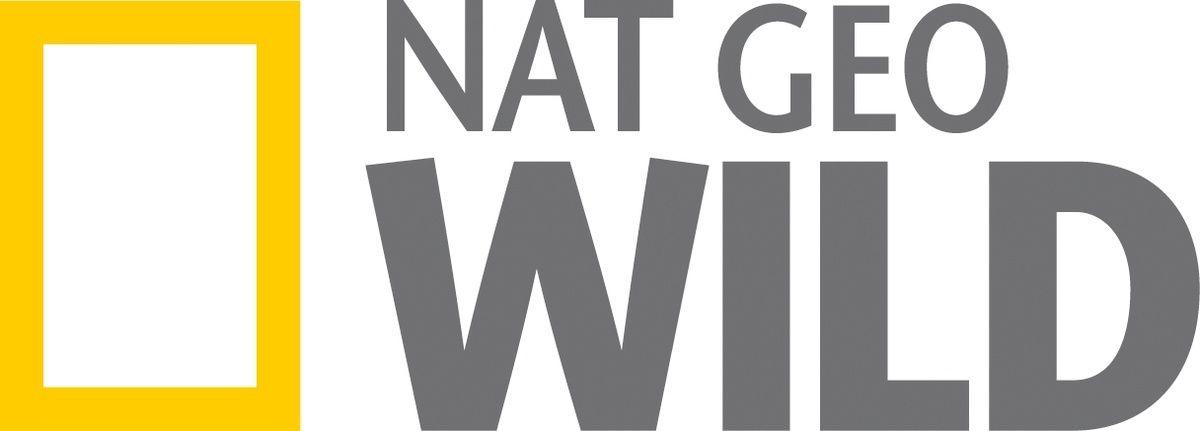 le Royaume des Singes, documentaire inédit sur Nat Geo Wild