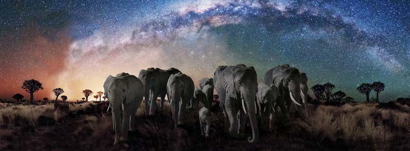 La nuit des éléphants (Crédit photo : # WINDS et Galatée Films)