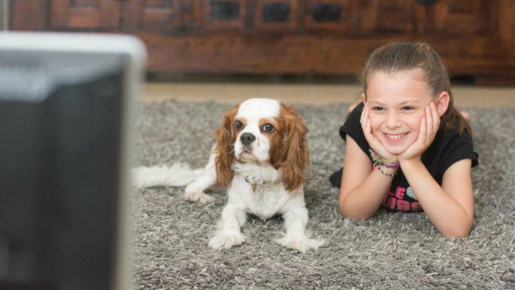 DOGTV, la première chaîne pour les chiens arrive en France
