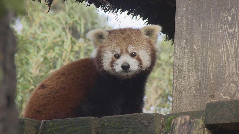Lancement record pour la nouvelle saison d'Une saison au zoo sur France 4