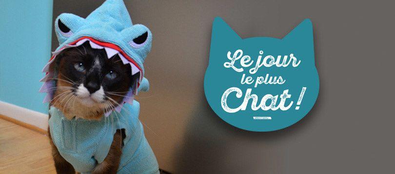 Le 8 août, les chats seront à l'honneur sur 6ter avec une soirée spéciale