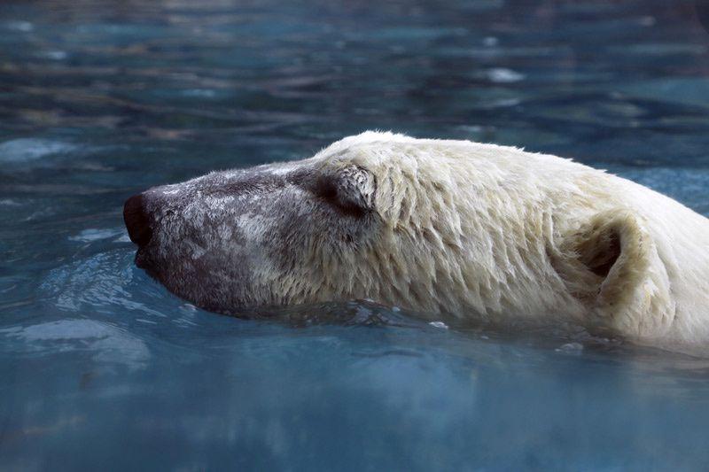 Une saison au zoo (Crédit photo : Gilles Gustine / SIPA / FTV)