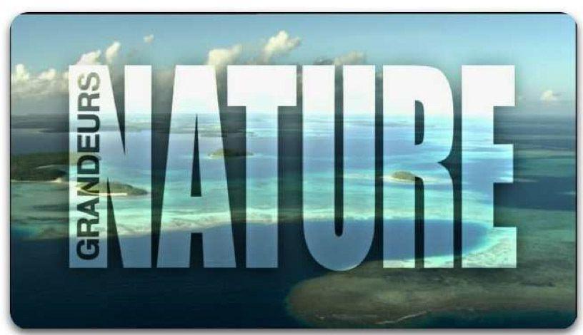 Grandeurs Nature à la rencontre du petit zèbre Punda sur France 2