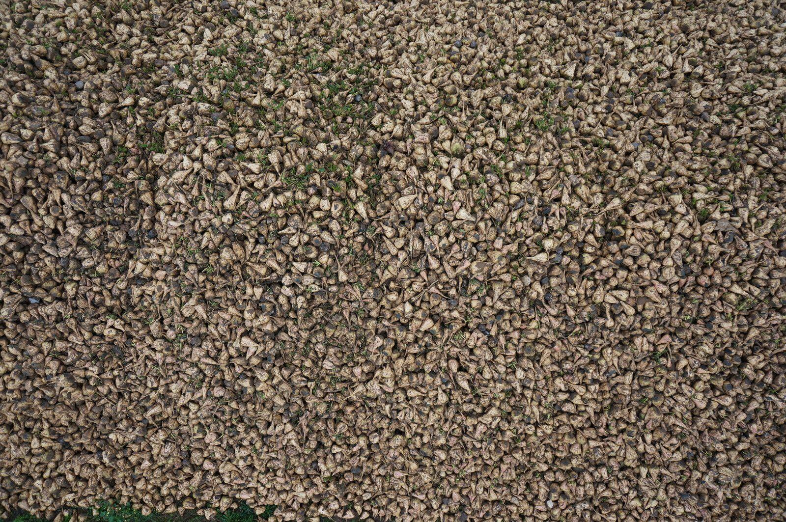 Un tas de betteraves en vue verticale, altitude 10m. Photo aérienne François Monier 8 novembre 2013