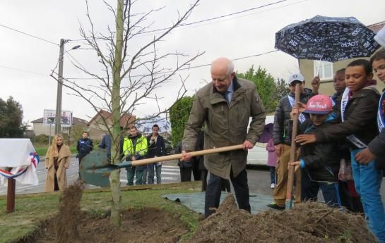 Goussainville plante un arbre pour soutenir la COP 21...A la Sainte Catherine , tout bois prend racine