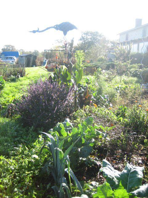 LE JARDIN IDEAL ! jardin BIO facile