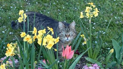 Le printemps ne sera plus jamais là pour Tigron