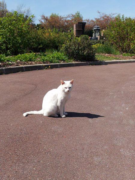 Des nouvelles de la petite chatte blanche du cimetière