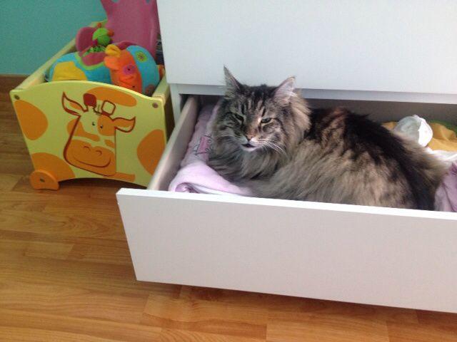 Wow ... Cats : oui, je suis une blogueuse à chats !