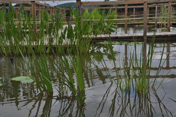 Jardin d'eau  (3)