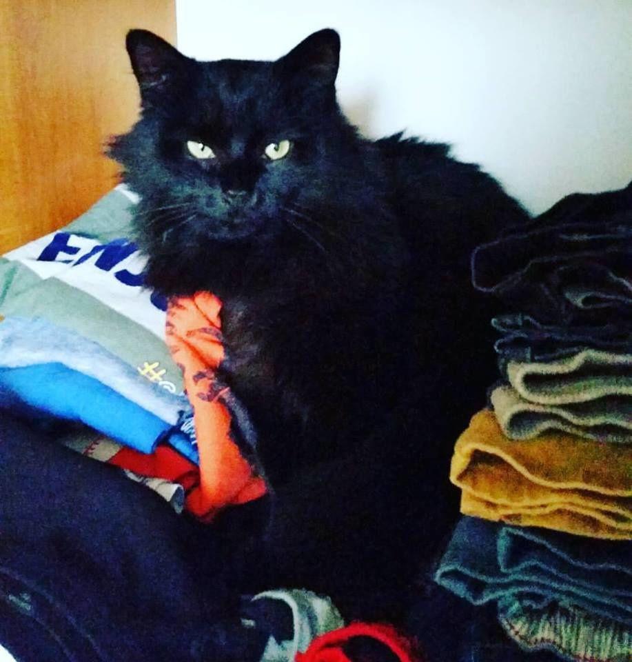 Une boule de poils aimer le blog de z bulon 39 s mummy - Mon chat fait pipi dans mon lit ...