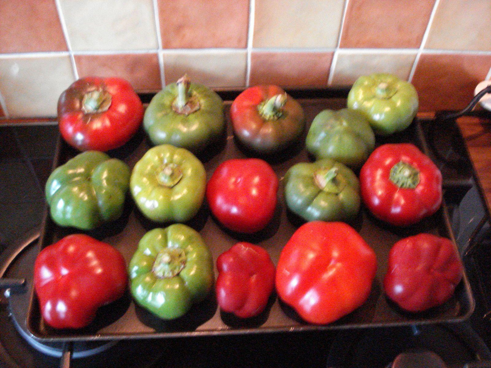 nos derniers tomates-- poivrons  ( une variété de Roumanie ) exeptionnel